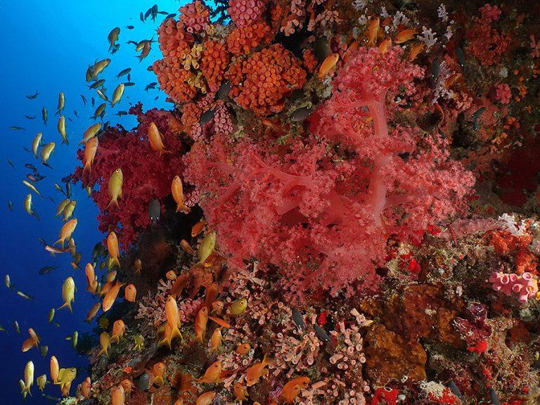 coral reef Pescador Island