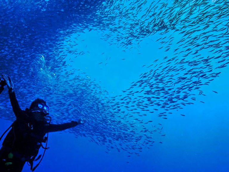 sardines_heart