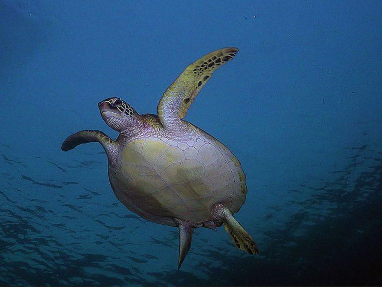 turtle_flight mode